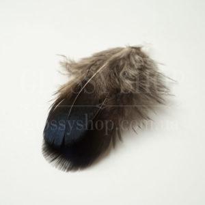Перья фазана купить в Киеве